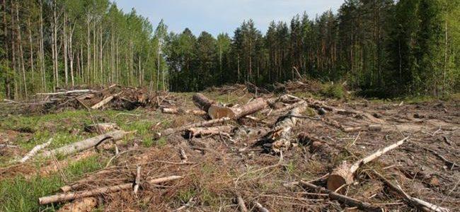 Верховна Рада остаточно криміналізувала незаконну вирубку лісу