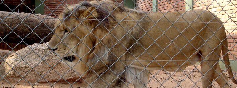 Після довгих років протестів, зоопарк Ісламабаду перетворять на заповідник для тварин